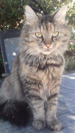 bästa katten